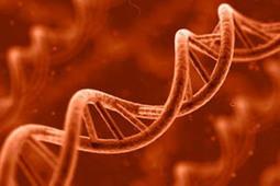 Flow Magazine - Εντοπίστηκε DNA αλόγου 700.000 ετών | Weird news | Scoop.it