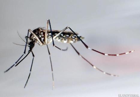 Dengue mantiene a cinco estados en situación de epidemia - Vida | Salud Publica | Scoop.it