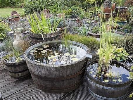 Créer un mini bassin | Côté Jardin | Scoop.it
