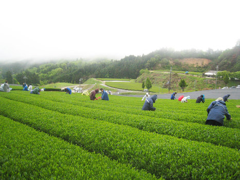 THE O DOR テオドー ギョームさんとの再会 | TEA FARM INOKURA | Theodor Press & News | Scoop.it