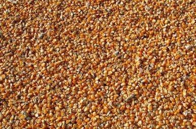 Tout comprendre de la guerre entre semences contrôlées et paysannes   JLGrego   Scoop.it