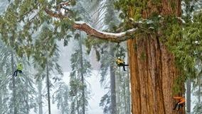 Un séquoia géant de 3200 ans capturé en 1 seule image | reforestation et lutte contre la déforestation | Ca m'interpelle... | Scoop.it