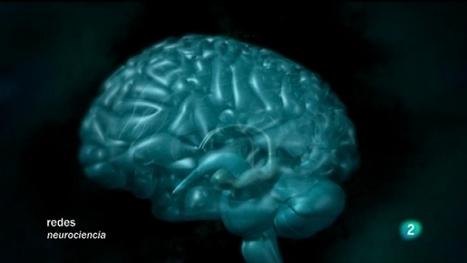 Redes - Antes y después de conocer el cerebro, Redes - RTVE.es A la Carta | Biología cada día | Scoop.it