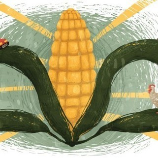 It's Time to Rethink America's Corn System   A Better Food System   Scoop.it