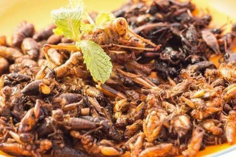 Why we might all be eating insects in the future | Entomophagy: Edible Insects and the Future of Food | Scoop.it