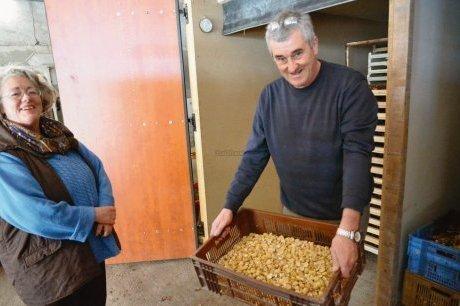 Châtaigne en forme   Agriculture en Dordogne   Scoop.it