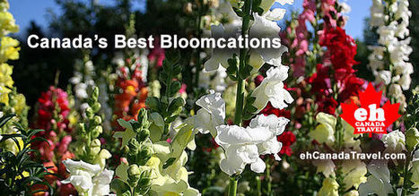 Bloomcations in Canada : Best Canadian Gardens | What's Growing On | Scoop.it