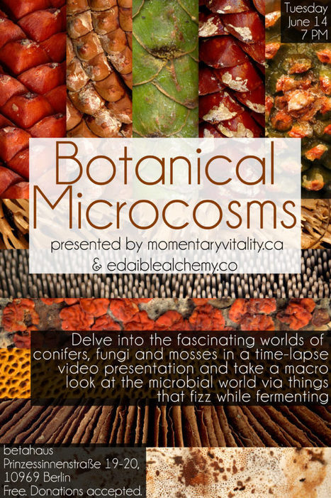 Botanical Microcosm - betahaus |Berlin | Media Aesthetics Lab | Scoop.it