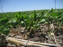 Soja, fertilizar para ser más rentables y sustentables | Agricultura y Ganaderia | Scoop.it