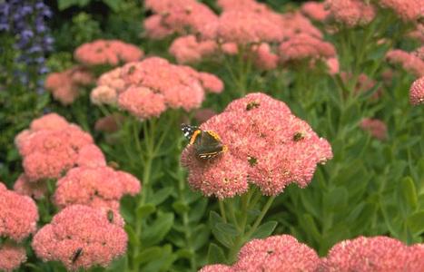 National Park Service: Pollinators | Homework Helpers | Scoop.it