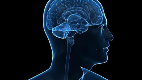 Brain Study Shows Consciousness Can Be Switched On and Off | Building Trust | Scoop.it