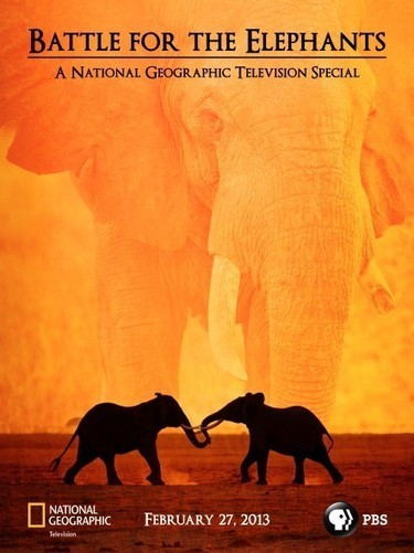 Nat Geo: Battle for the Elephants Episode 2: Criminal Traders Exposed | Wildlife Tra