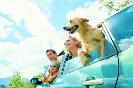Reisen mit tierischen Gefährten - airportzentrale.de | Urlaub mit Hund | Scoop.it