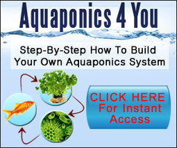 Growing Marijuana – Hemp – 420 – Cannabis – Pot – Weed with Aquaponics System | weed for aquaponics | Scoop.it
