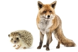4 Imperatives for CMO-CIO Collaboration: Lessons From the Fox and the Hedgehog | transition management | Scoop.it