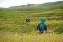Hunger Persists in Asia Amid Dynamic Economic Growth - ADB Panel   Asian Development Bank   Urban Food Security   Scoop.it
