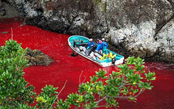 The Cove Guardians and the Sea Shepherd Policy of Gaiatsu | Marine life | Scoop.it
