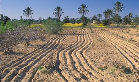 La Tunisie traverse une inquiétante crise hydraulique | CIHEAM Press Review | Scoop.it