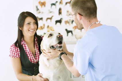 Select a top veterinarian animal hospital for your pet | Veterinarian Hospital | Scoop.it