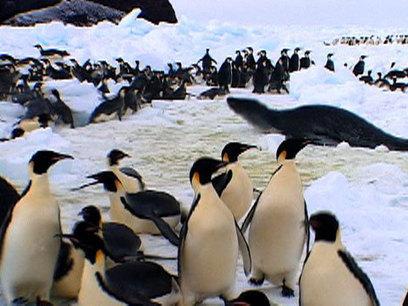 Animal Winter Games: Race to the Ice   Antarctica   Scoop.it