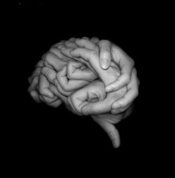The Neuroscience of Learning to Trust Yourself - PsychCentral.com (blog) | Fun with Psychology | Scoop.it