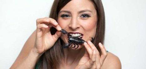 Mangerons-nous des insectes dès demain ?   Alimentation   Scoop.it