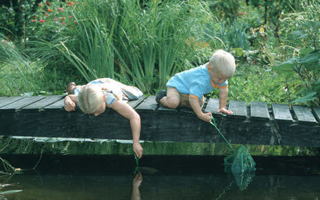 The perfect plant for...a sunny pond edge - Telegraph | Gardening is more than Digging the Dirt | Scoop.it