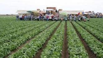 Arizona Veg IPM Update: spider mites, powdery mildew, herbicides | Western Farm Press | CALS in the News | Scoop.it