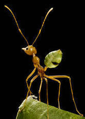 Museum of Science and Industry: Hidden Life of Ants Exhibit | All About Ants | Scoop.it