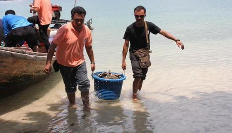 Black market coral trade takes hit as police seize more than 600 live samples in Phuket | Wildlife Trafficking: Who Does it? Allows it? | Scoop.it