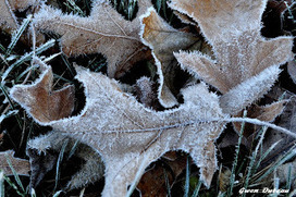 Poetic Notions: Morning Frost - A Thanksgiving Tribute. | Pure Poetry | Scoop.it