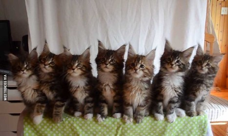 Testing the Reflexes of Seven Kittens | Animals | Scoop.it