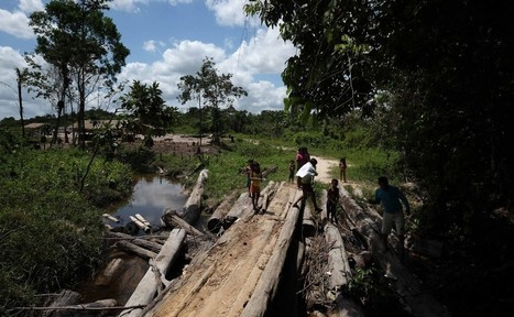 Amazon residents resort to militias to keep out illegal loggers | Upsetment | Scoop.it