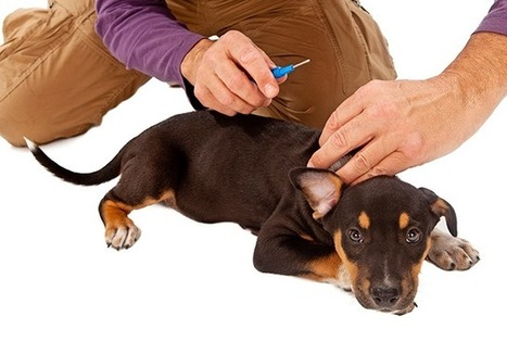 How to Microchip Your Pet—And Why It's Important | Nature Animals humankind | Scoop.it