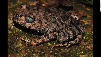 NEW CLASS OF FROGS FOUND IN THE NORTH-EAST…   Daily jankari   Scoop.it