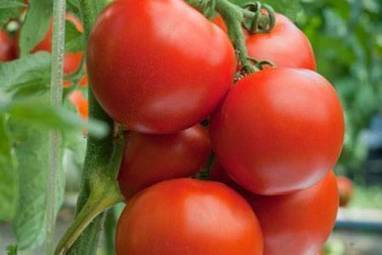 5 health benefits of tomatoes - The Times of India | Your Food Your Health | Scoop.it