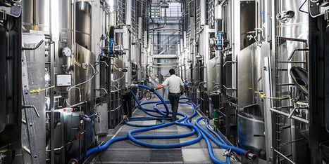Des coopératives au pays des châteaux bordelais | Le vin quotidien | Scoop.it