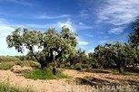 Campo de Belchite - Localités - CAI Tourisme d'Aragon   Saragosse  -   Goya, l'enfant du pays   Scoop.it