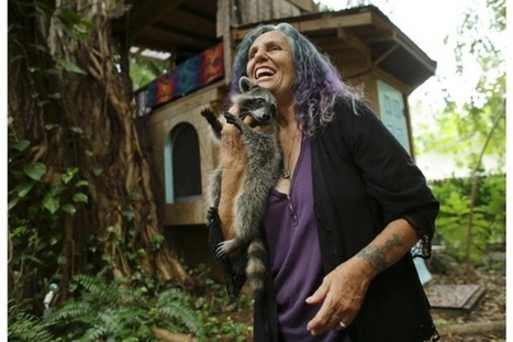 Is living in a treehouse wrong? Florida woman ordered to leave hers | enjoy yourself | Scoop.it
