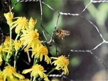 Pétition pour une protection de l'apiculture et des consommateurs face au lobby des OGM | Voyages et Gastronomie depuis la Bretagne vers d'autres terroirs | Scoop.it