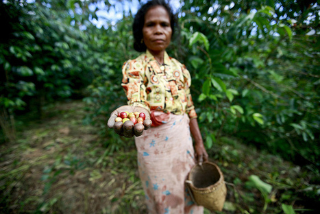 Indigenous Peoples and the Diversity of Food | phytopharmaceuticals, pollinators, biodiversity | Scoop.it