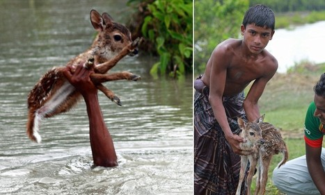 Brave boy risks own life to save baby deer from drowning | All about water, the oceans, environmental issues | Scoop.it