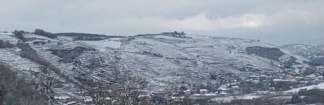 Vignoble sous la neige condrieu et cote rotie - Le blog des ... | oenologie en pays viennois | Scoop.it