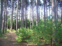 The University of Maine - School of Forest Resources - University Forests | Urban, Suburban, and Campus Forests: Conservation and Curation | Scoop.it
