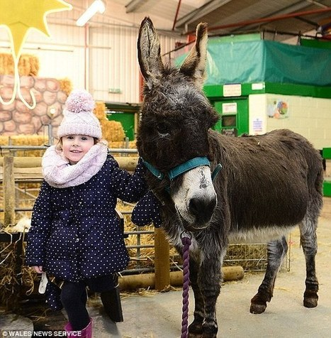 Two teenagers arrested for stabbing Cheeky the nativity donkey | @NewDayStarts | Scoop.it