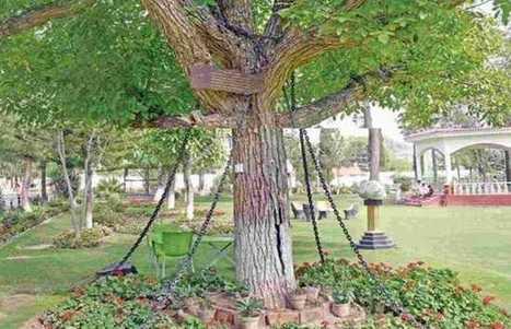 118 साल से गिरफ्तार है ये पेड़, यहां पढ़ें हैरान कर देने वाली वजह - Tree arrested for 118 years in Pakistan   Rajasthan Ptrika Latest Hindi News   Scoop.it