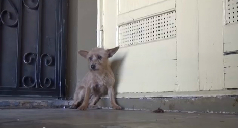 From Terrified to Loving — Watch the Amazing Transformation of This Abandoned Dog! (VIDEO)   Animals   Scoop.it