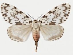 Norvège. Les insectes sont, parmi les organismes vivants, ceux qui vont réagir le plus rapidement aux changements climatiques | EntomoNews | Scoop.it