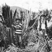 Smallpox-like-disease a big deal - Otago Daily Times   Epidemics   Scoop.it