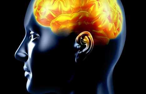Neurosciences   Apprentissage et numérique éducatif en EPS   Scoop.it